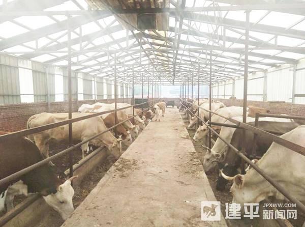 宋家湾村:发展壮大养殖业 拓宽群众致富路